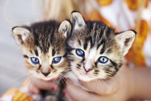 Sich um Kätzchen kümmern beinhaltet auch Hygiene
