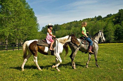 Spüren Pferde was wir fühlen oder ist das ein Ammenmärchen?