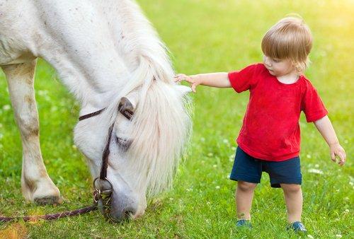 Spüren Pferde was wir fühlen und reagieren sie darauf?