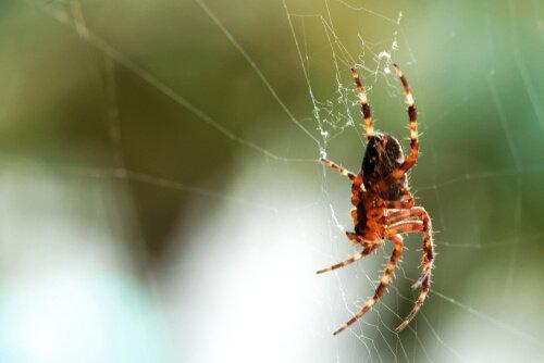 Die Spinne ist gut für das Ökosystem im Haus