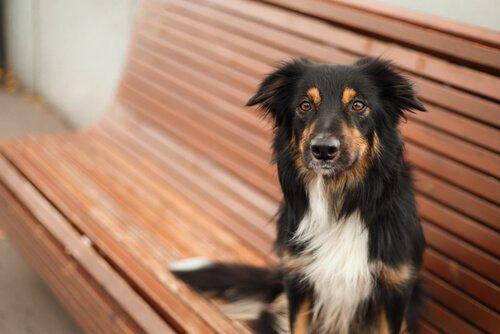 Ist das Kastrieren vorteilhaft für mein Haustier?
