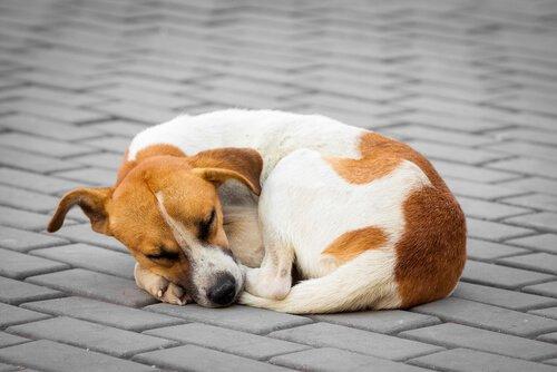 Straßenhund träumt von einem neuen Zuhause.