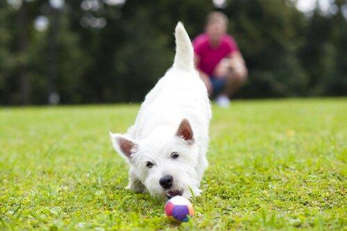 Tipps zur Pflege eines blinden Hundes helfen ihren Vierbeiner glücklich zu machen.
