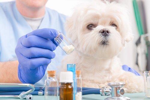 Die Toxizität von Ibuprofen bei Hunden