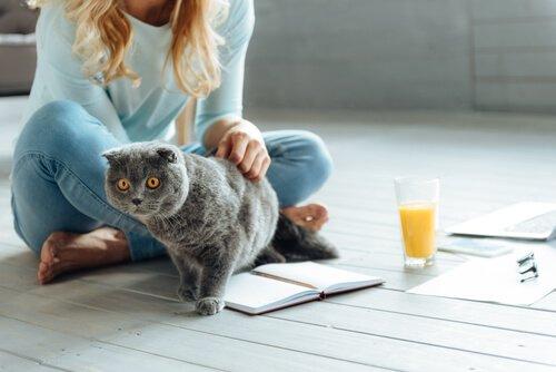 Toxoplasmose und das Zusammenleben mit Katzen