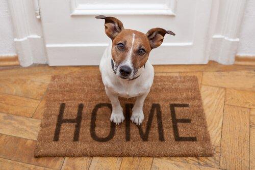 Uggie, einer der berühmtesten Hunde.