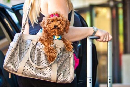 Verreisen mit dem Hund? Diese Apps sind nützlich