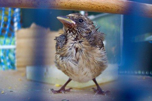 Man kann einem Vogelküken das Leben retten