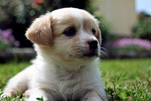 Ursachen für die Entfärbung der Nase beim Hund
