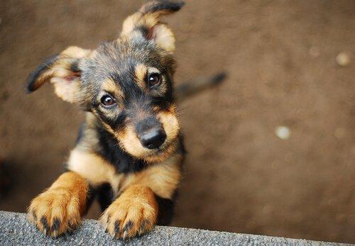 Lust, einen Welpen zu adoptieren