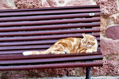 Wie hilft man streunenden Katzen?