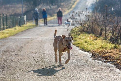 Wie lange muss ich einen verlorenen Hund suchen?