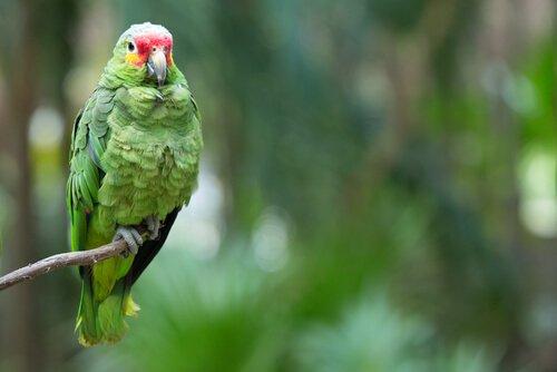 Wie man Papageien pflegt