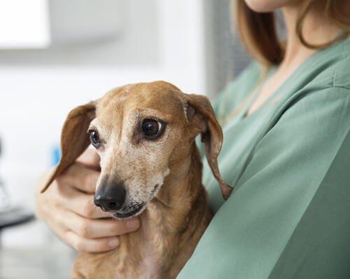 Wie man einen epileptischen Hund unterstützend pflegt