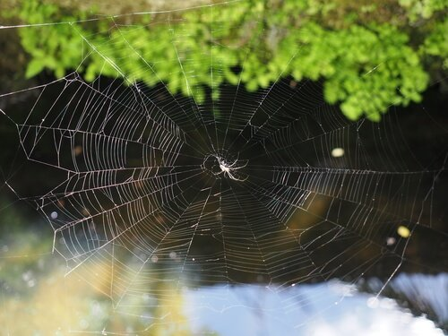 Wie stellt die Spinne eigentlich ihr Netz her?
