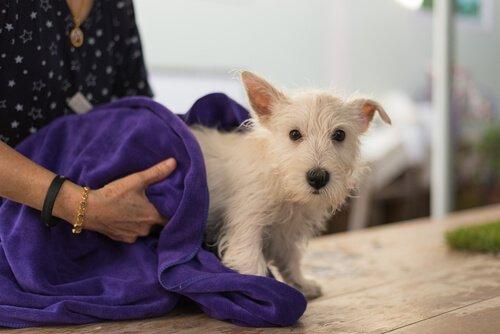 Wie man Zecken bei Hunden entfernt