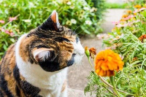 8 Gerüche, die Katzen anlocken