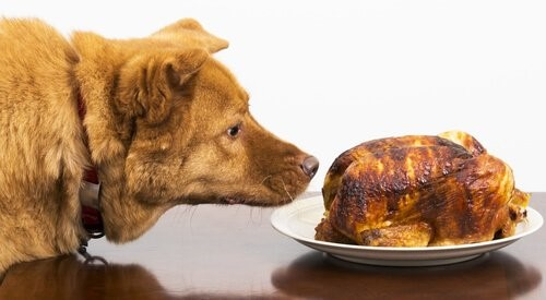 Aflatoxine - Hund riecht Essen