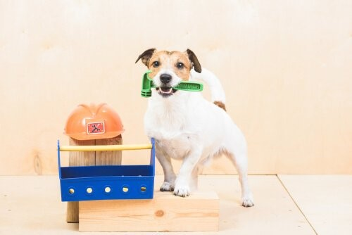 Aufgaben für Hunde: Was kannst du verlangen?