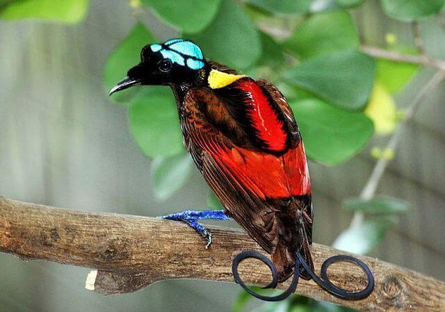 Die 6 beeindruckendsten Vögel der Welt