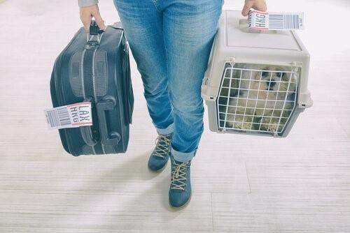 Transportbox: Wie kannst du deinen Hund daran gewöhnen?