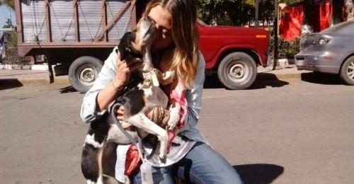Eine läufige Hündin - Frau und Hund