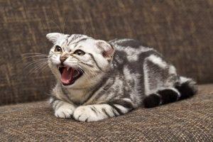 Wie du eine rebellische Katze erziehen kannst