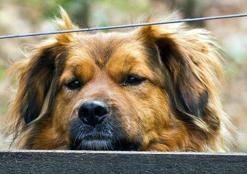 Hepatitis beim Hund: Ursachen, Symptome und Behandlung