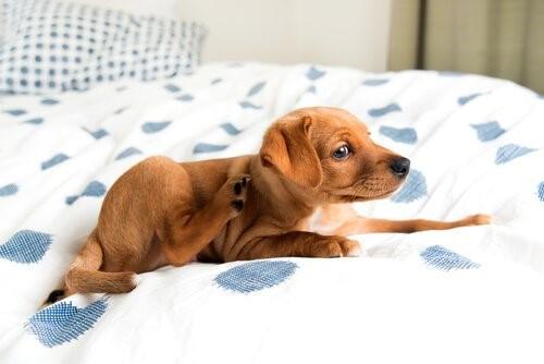 Hot Spots bei Hunden