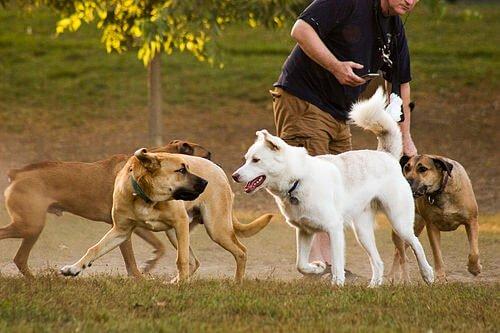 4 Hundespiele ohne Ball
