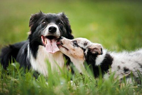 Integration eines Hundes in die Familie