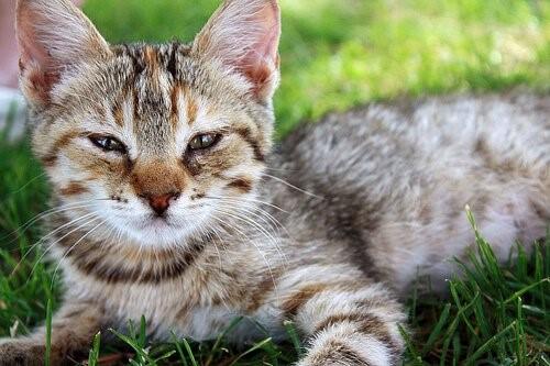 Nein, Katzen sind nicht intelligenter als Hunde!