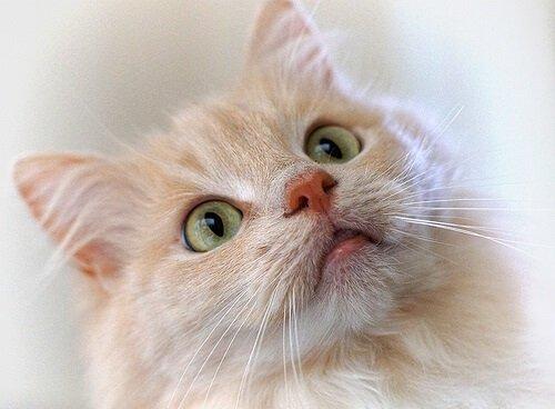 Katzentraining mit Clicker