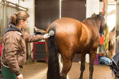 Pferdeschwanz: richtige Pflege und Tipps
