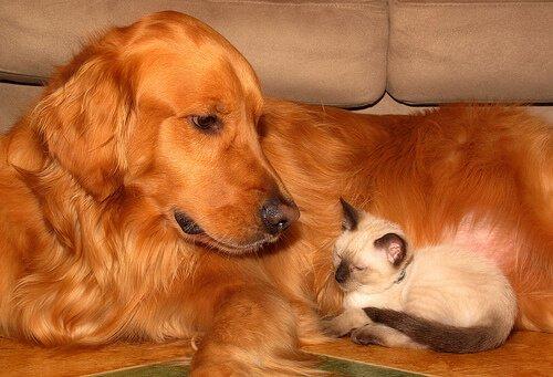 Tipps für die richtige Haustierpflege