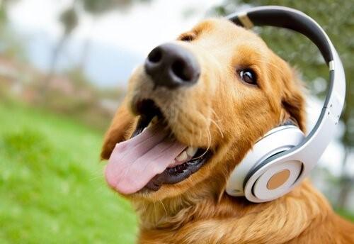 Relax My Dog - Hund mit Kopfhörern