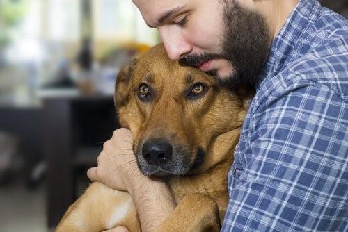 Krebsschmerzen bei Hunden - Mann umarmt Hund