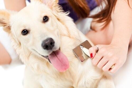 Schuppen bei Hunden - Frau bürstet Hund