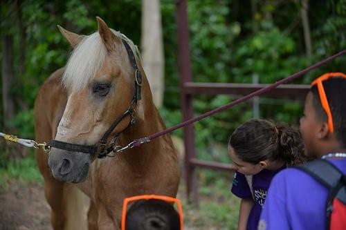 Tiergestützte Therapie - Hippotherapie mit Kindern