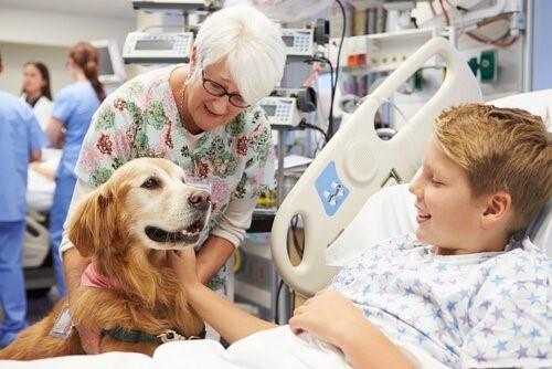 Tiergestützte Therapie - Hund im Krankenhaus