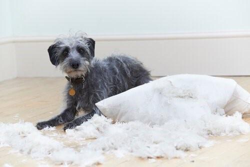 Sechs Verhaltensprobleme bei Hunden