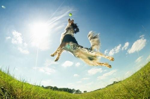 Warum wachen Hunde mit Energie auf - Hund springt