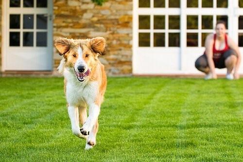 Wie erziehst du deinen Hund, damit er nicht von zu Hause wegläuft?