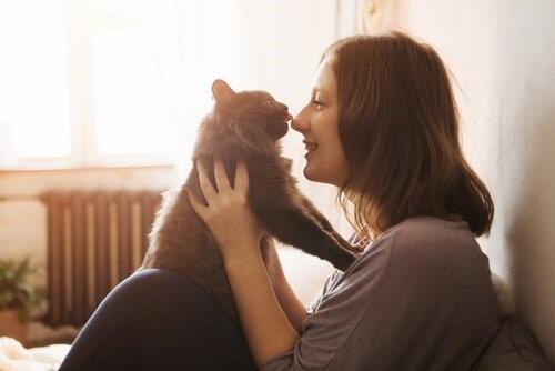 Wie gewinnt man das Vertrauen einer Katze - Katze leckt Gesicht