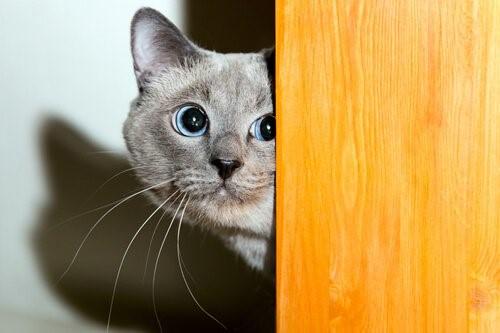 Wie gewinnt man das Vertrauen einer Katze?