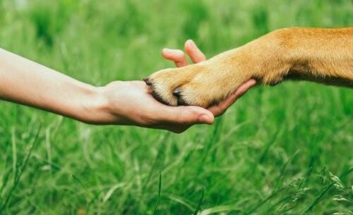 Wie du dir den Respekt deines Hundes verdienst
