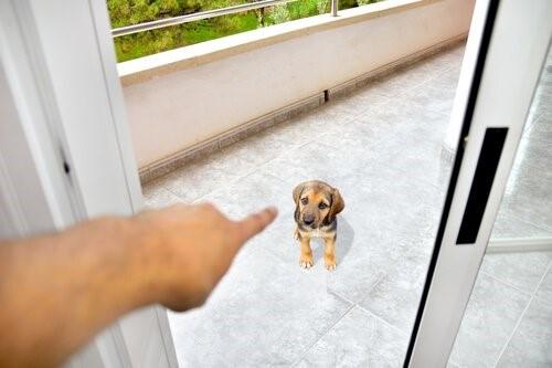Wie verdienst du den Respekt deines Hundes - Hund wird ausgesperrt