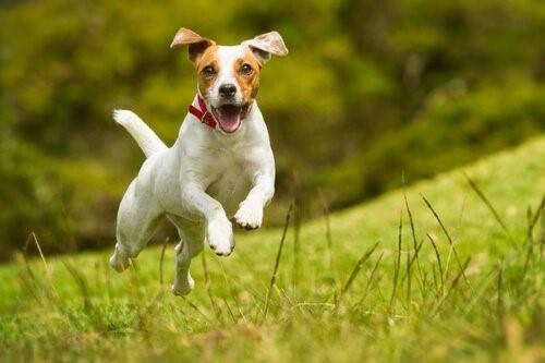 Anzeichen, dass ein Hund glücklich ist