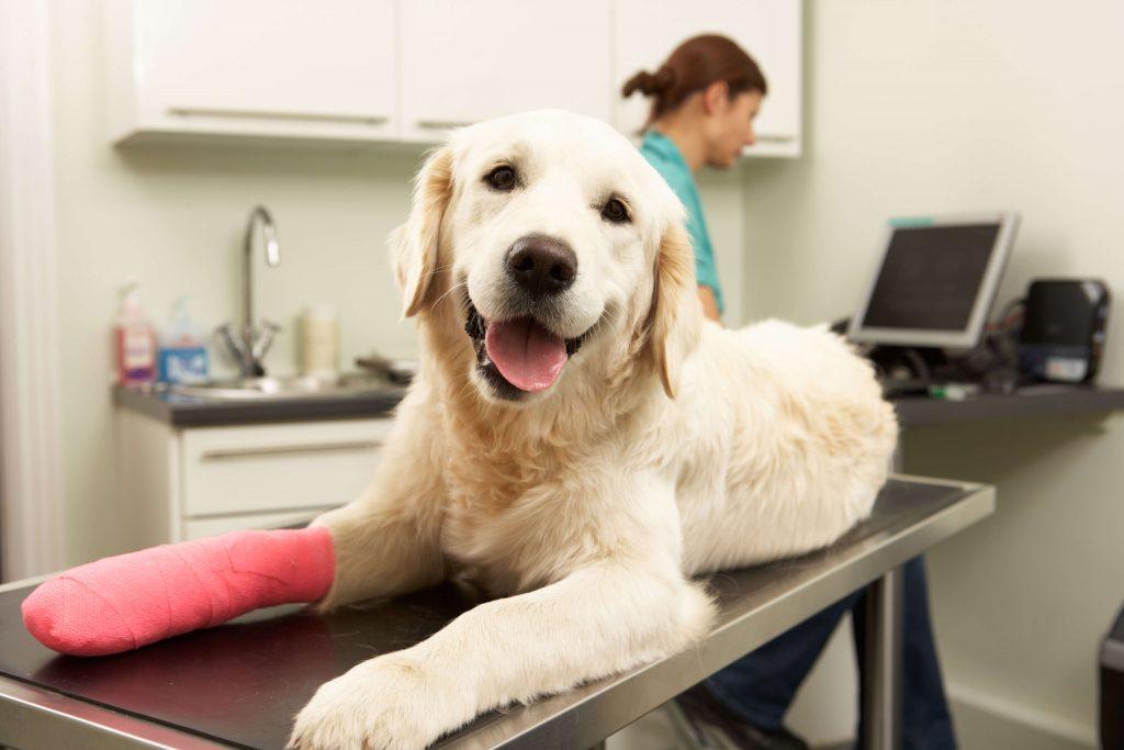 Zwangsstörungen bei Hunden