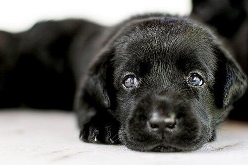 Adoption eines Hundes: alles was du wissen musst